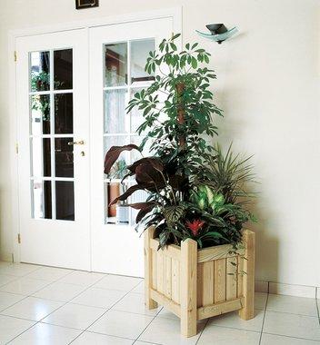 Fuchsia bloembak